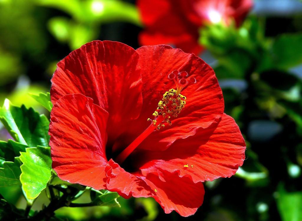 Цветок смерти