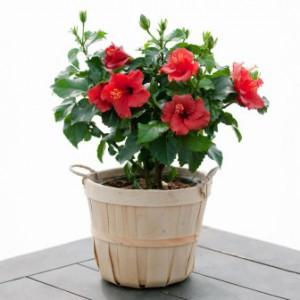 Фото с сайта www.360doc.com