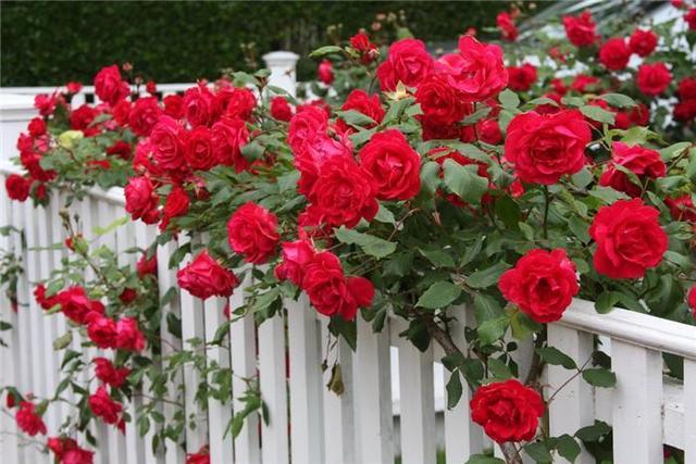 Фото с сайта www.alena-flowers.ru