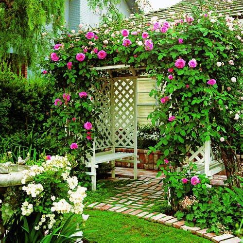 фото с сайта: www.orhidei.org