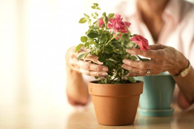 Фото с сайта: happymodern.ru