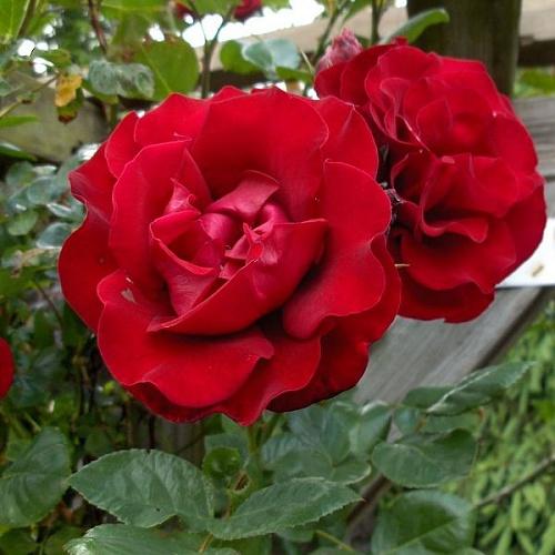 фото с сайта: www.7flowers.ru