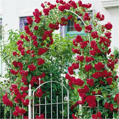 Опора для плетущихся роз