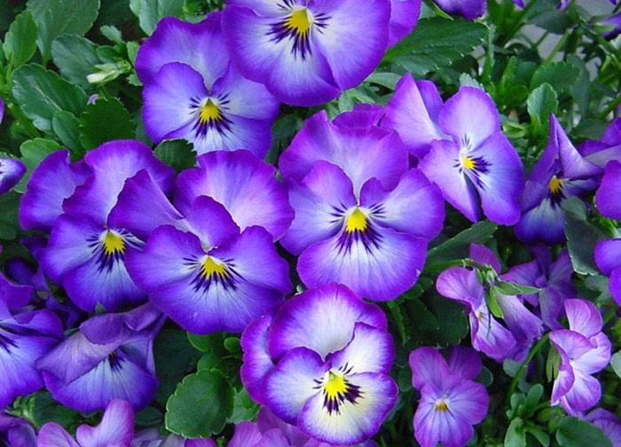 Фото с сайта: foto-cvetov.com