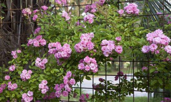 Фото с сайта: www.acacia.od.ua