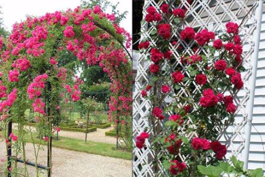 Фото с сайта: rose.violet-lady.ru