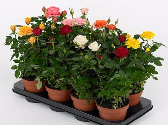 Фото с сайта: flower-nt.pro