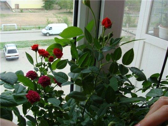 Фото с сайта: www.planetviolets.com