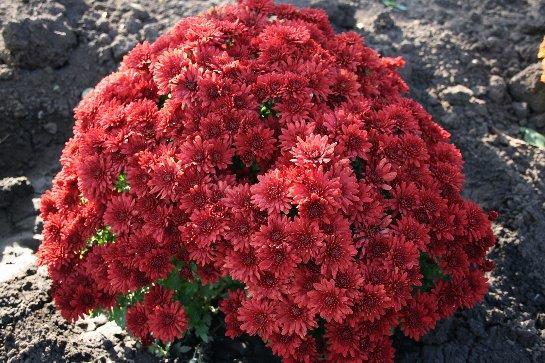 Фото с сайта: www.myhome-flowers.ru