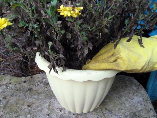 Фото с сайта: http://1dacha-sad.com/