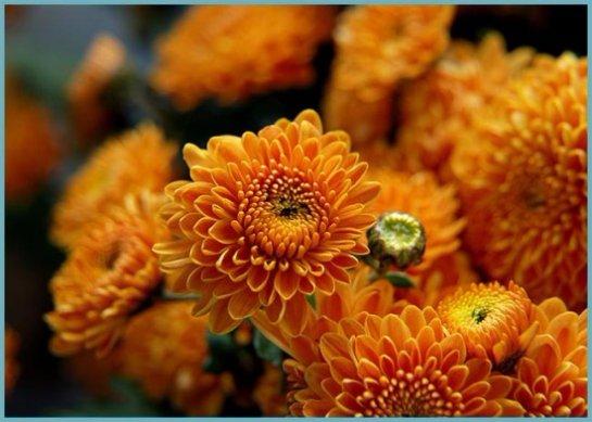 Фото с сайта: moyadacha.temaretik.com