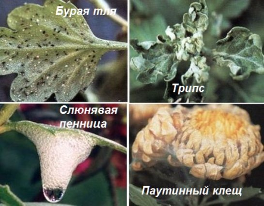 Фото с сайта: sferasada.ru