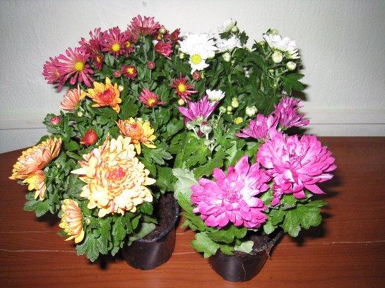 Фото с сайта: flowers-in-home.ru