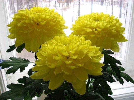 Фото с сайта: flowertimes.ru