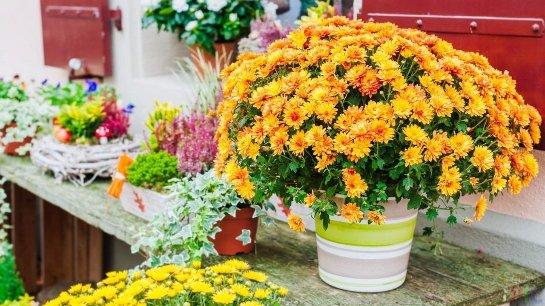 Фото с сайта: classpic.ru