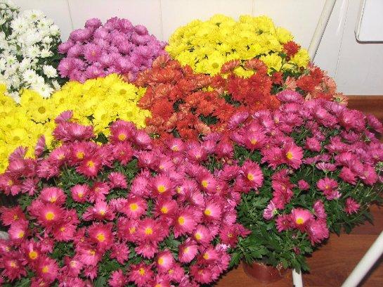 Фото с сайта: my-flower.com.ua