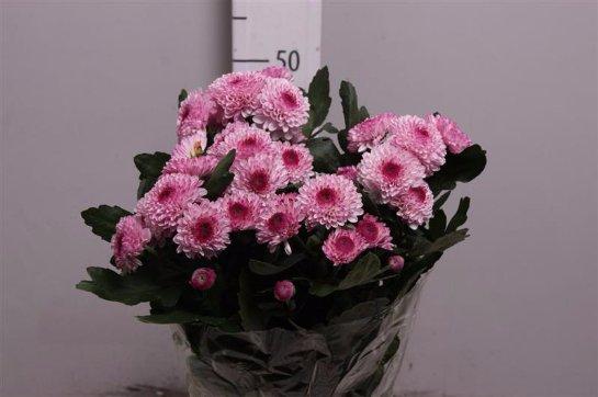 Фото с сайта: floritime.ru