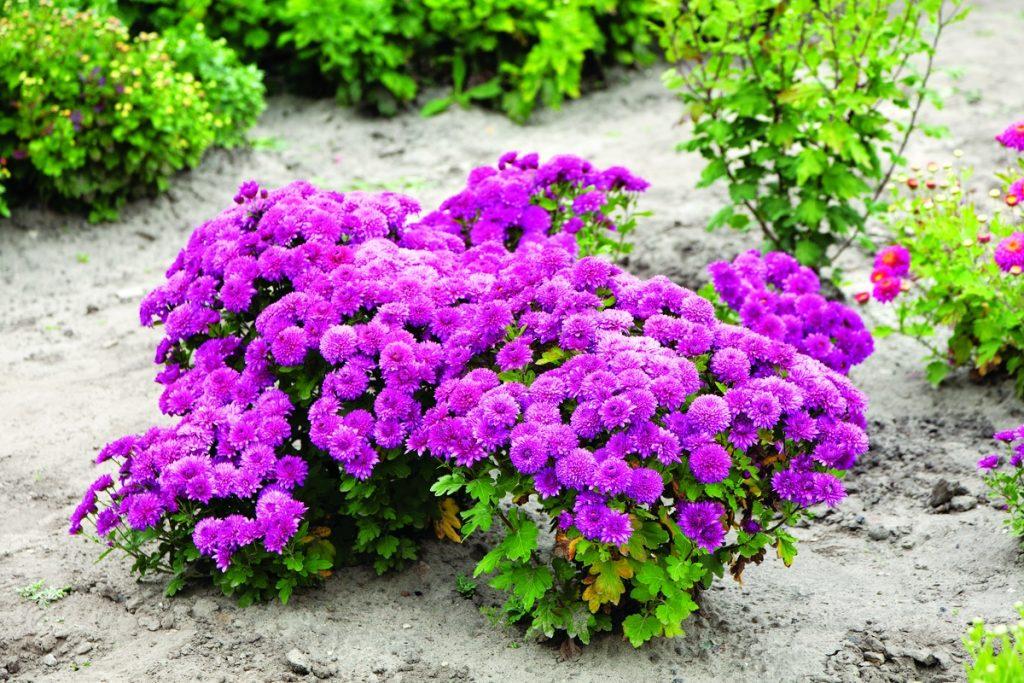 Фото с сайта: vogorode.com