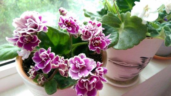 Фото с сайта: herbcare.ru