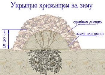 Фото с сайта: cvetok-v-dome.ru