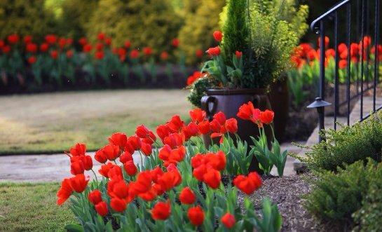 Фото с сайта: homester.com.ua