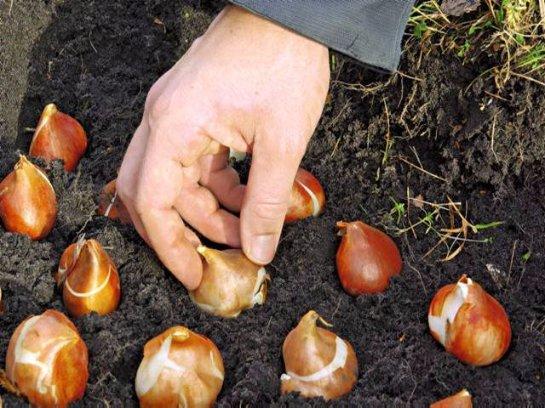 Фото с сайта: Sadoved.com
