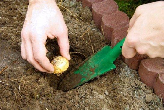 Фото с сайта: OgorodSadovod.com