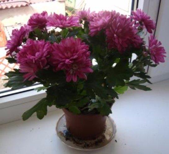 Фото с сайта: plantus.ru