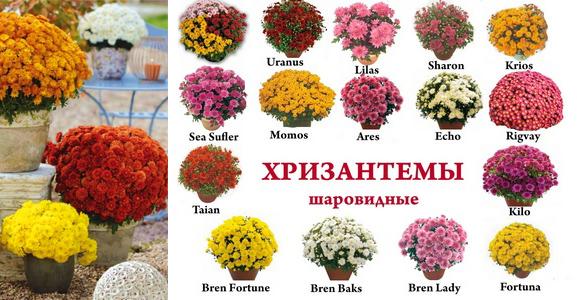 Фото с сайта: flowerslove.com.ua