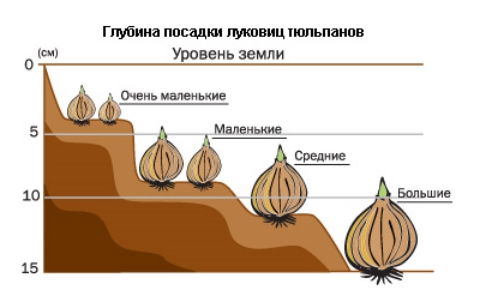 Фото с сайта: mirsadovodnik.ru