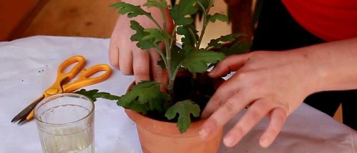 Фото с сайта: ytimg.com