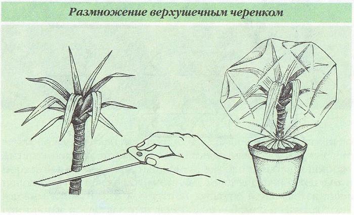 Фото с сайта: detki.dn.ua