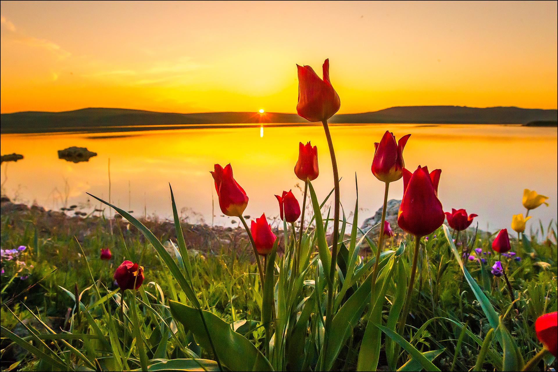 фото с сайта http://barmani.ru/