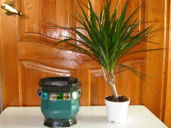 Фото с сайта:1dacha-sad.com