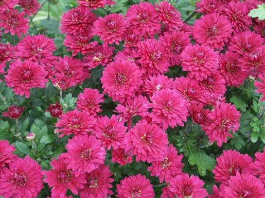 Фото с сайта: flower.onego.ru