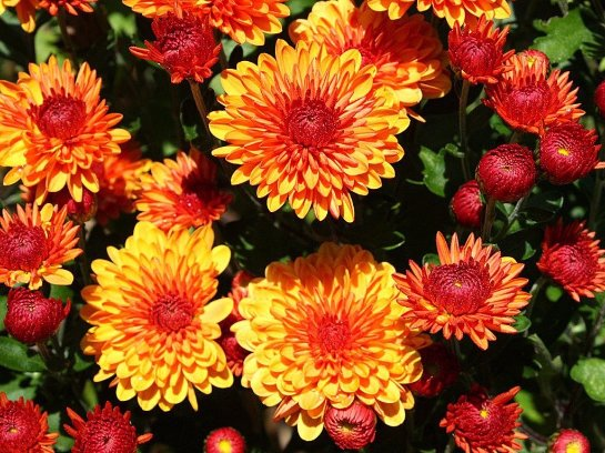 Фото с сайта: www.remontbp.com