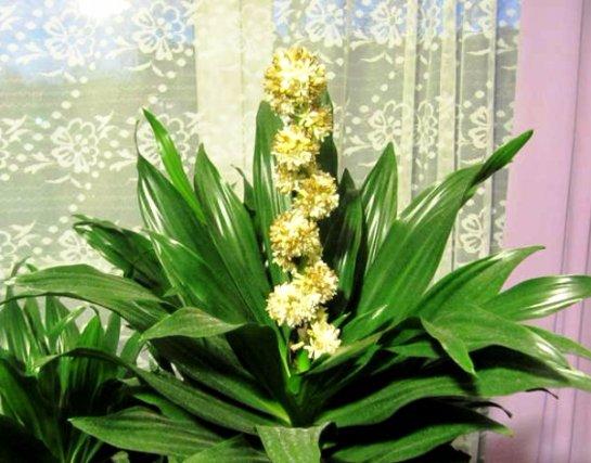 Фото с сайта: MyOrchidea.ru