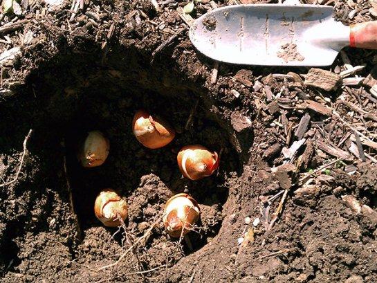 Фото с сайта: floristics.info