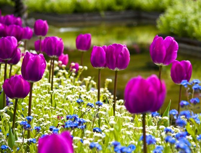 Фото с сайта: flowers.cveti-sadi.ru