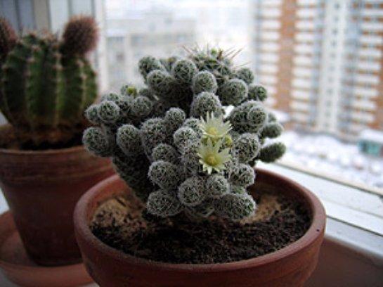 Фото с сайта: CveTochki.net