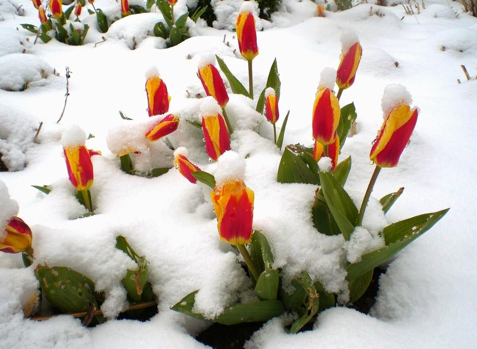 фото с сайта http://yagodka2012.blogspot.com/