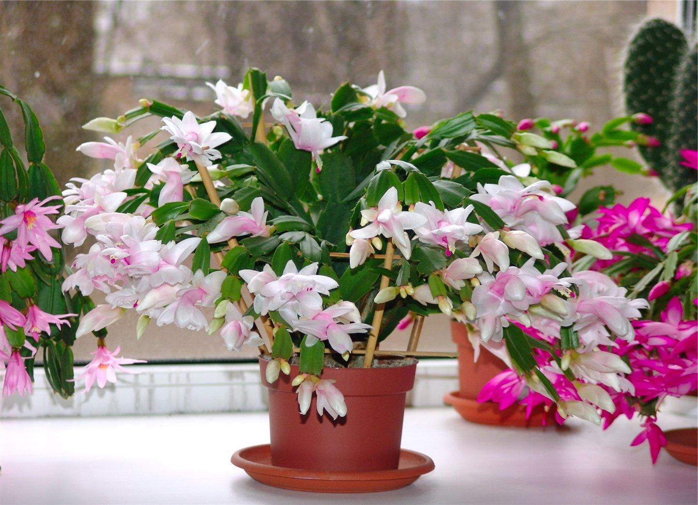 фото с сайта http://o-flora.com