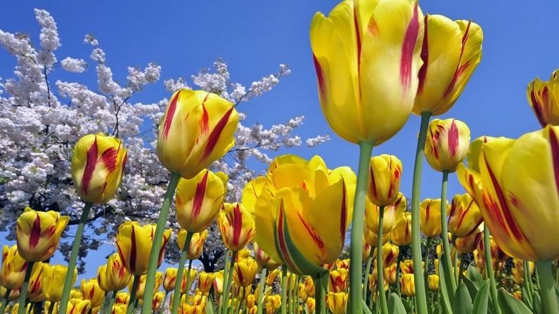 Фото с сайта: homester.com