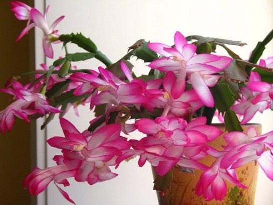 Фото с сайта: OtvetProst.com