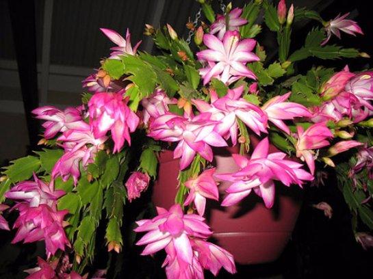 Фото с сайта: zonavazona.com