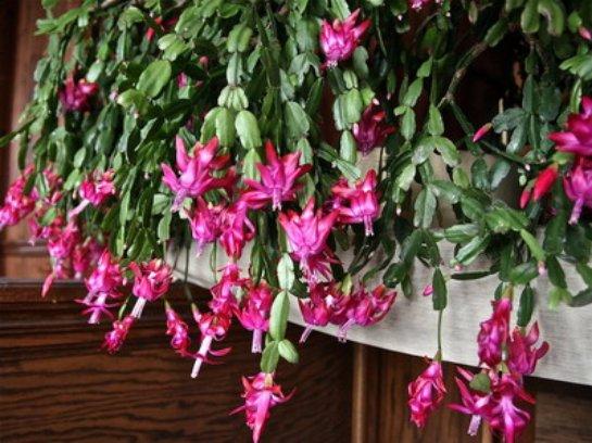 Фото с сайта: www.flowerbank.ru