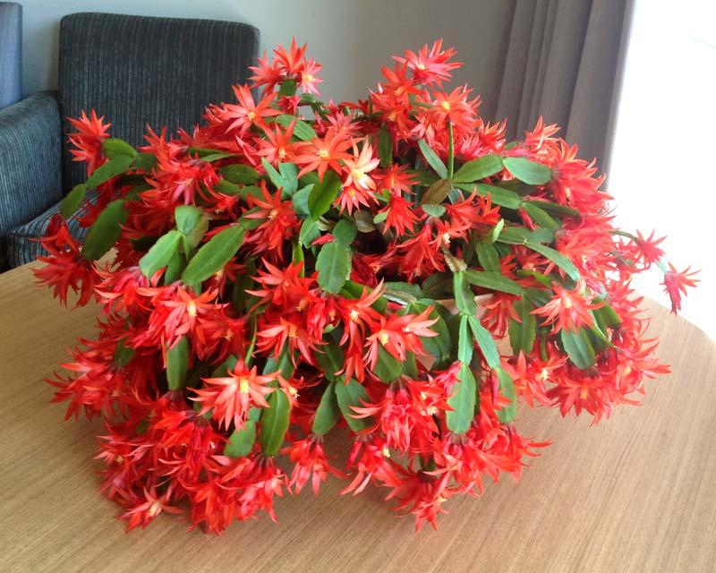 Фото с сайта: gardensonline.com.au
