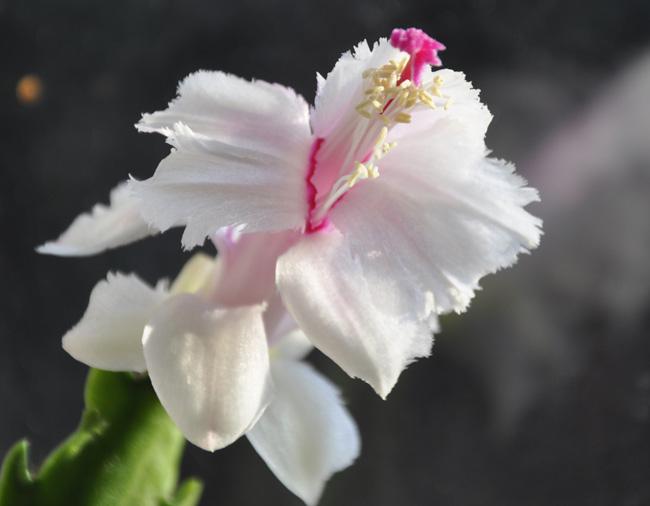Фото с сайта: blogspot.com