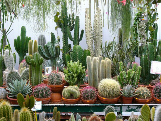 Фото с сайта: freshremont.com