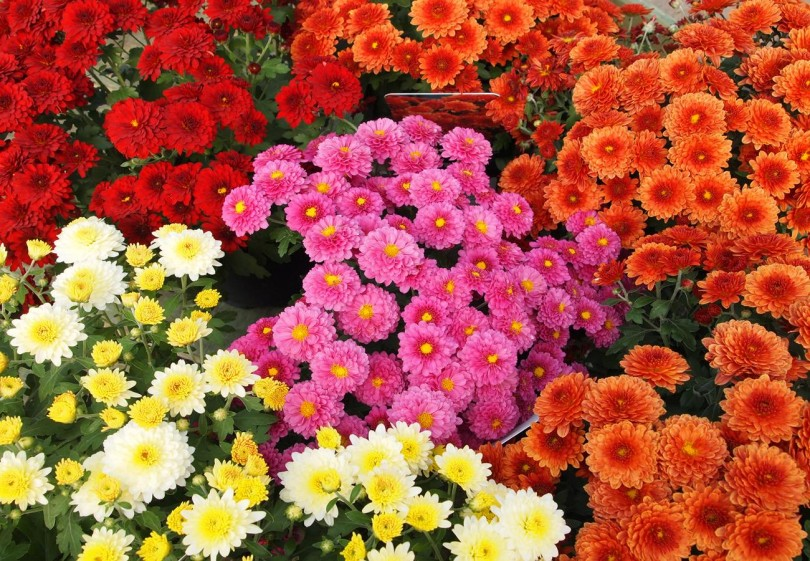 Фото с  сайта: plantsvideoworld.ru